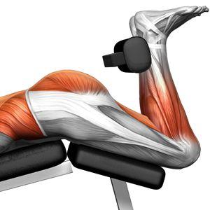 Hammer Strength Prone Leg Curl 11