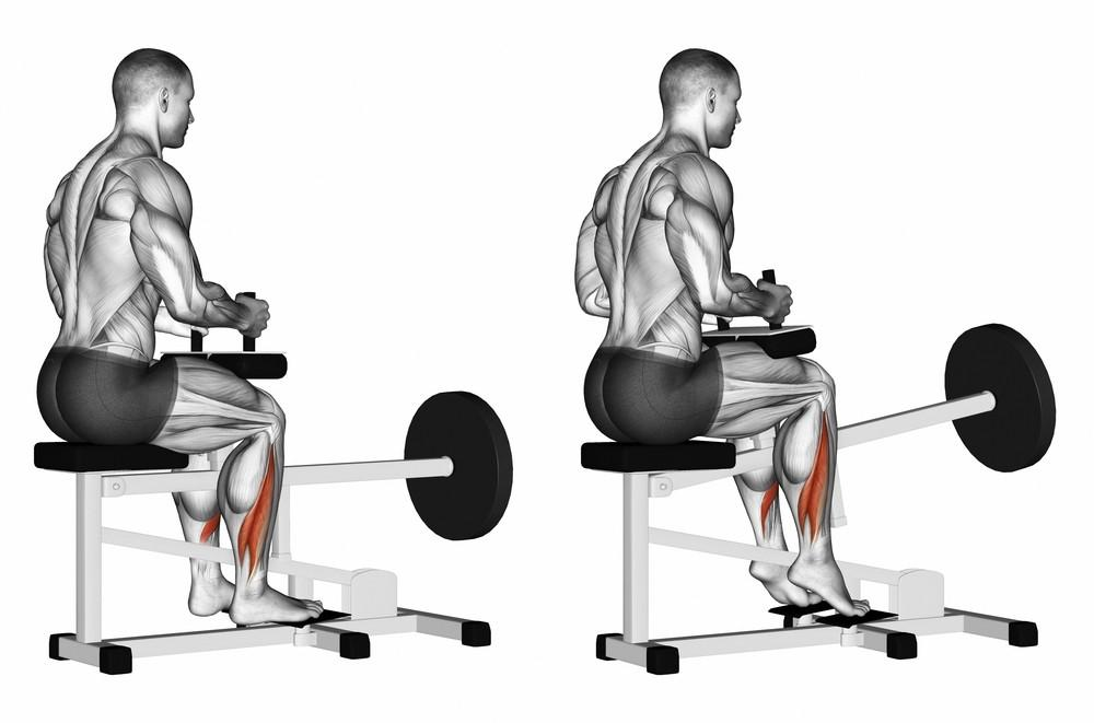 Commercial Seated Calf Raise 10