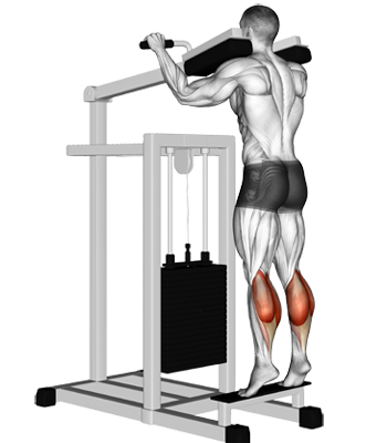 Commercial Seated Calf Raise 11